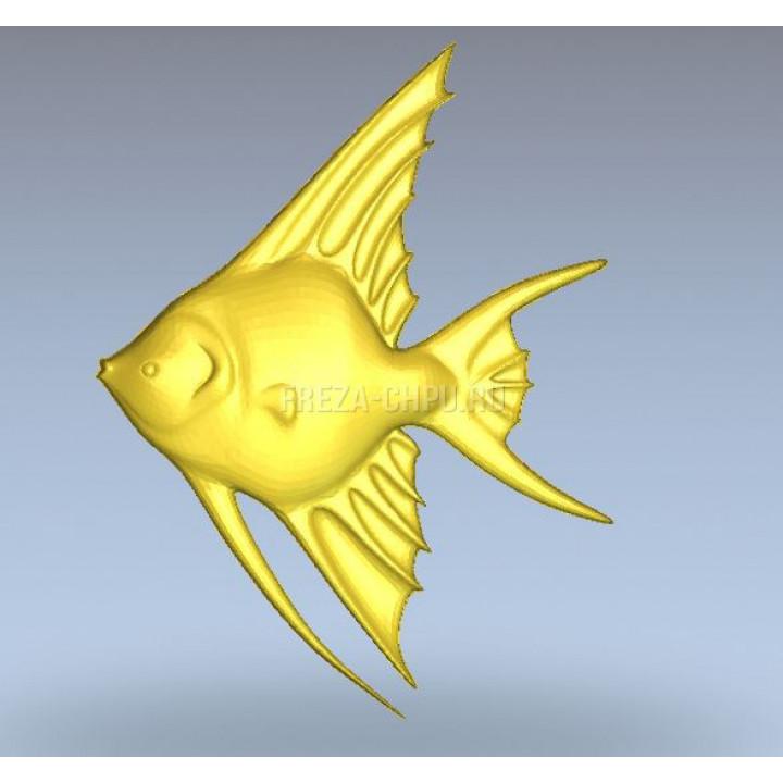 Рыба_001